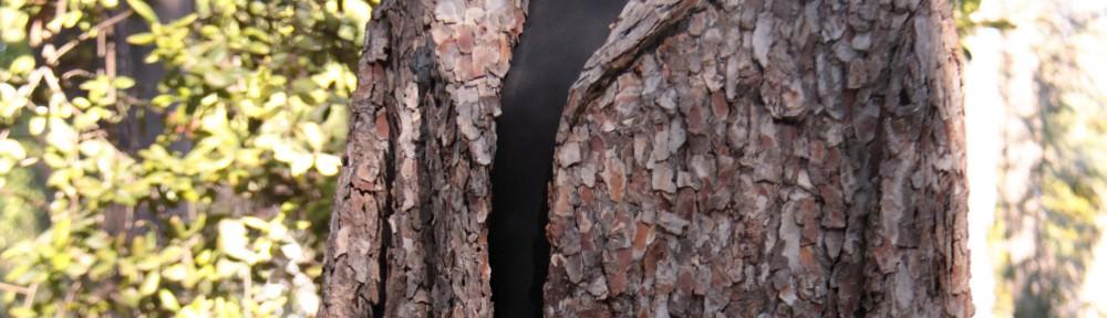 Abric I, 2007 Corteza de pino 120x60x60cm. Imagen cedida por Florentina Sanchez.