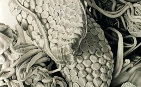 "Ernesto Casero, ""Micropaisaje II"", 2011 lápiz carbón sobre papel 120x200 cm. Imagen cedida por pazYcomedias."