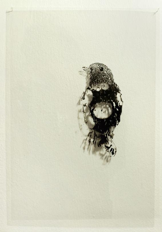 Xavi Déu. Tots els ocells del món, 2012. Imagen cortesía Espai Tactel