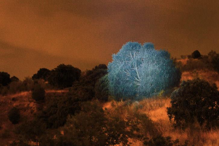 Sebas Beyro. El libro de las tierras secretas. Imagen cortesía Galería Liebre