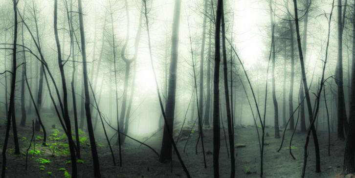 Obra de Pablo Pazos para la exposición 'Claros del bosque'. Imagen cortesía de Espai Rambleta.