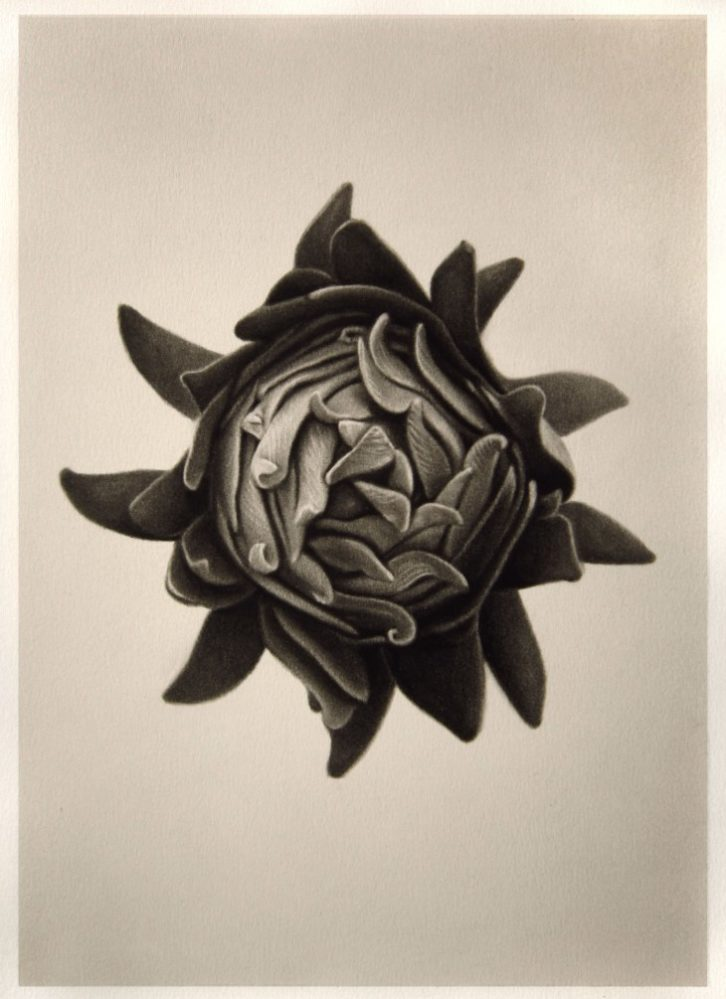 Obra de Ernesto Casero. 'Taxonomías', en Gris Magatzem d'Art.