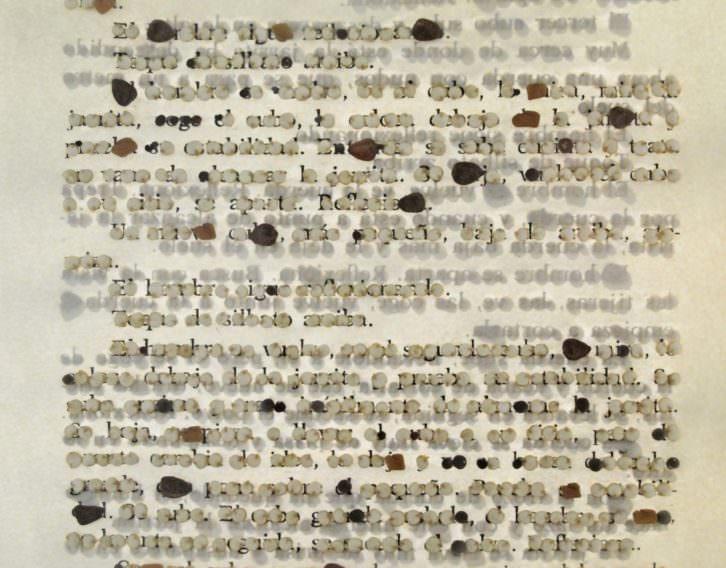 Rocío Garriga. Act without words II (detalle), 2014. Semillas, papel, madera y cristal. 30 x 86 cm. Cortesía Galería Paz y Comedias.