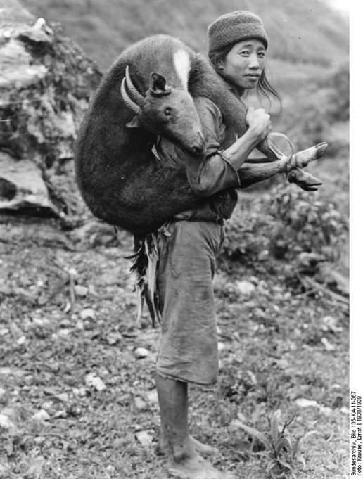 A pesar de la fe en la reencarnación, hay que comer. imagen, Ernst Krause, 1938/39. Cortesía Bundesarchive.
