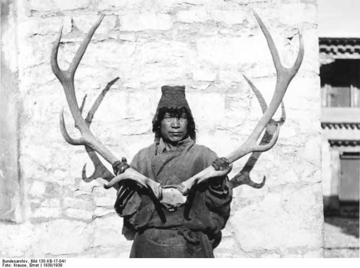 Tibetano con la cornamenta de una res. Imagen Ernst Krause, 1938/39. Cortesía Bundesarchive.