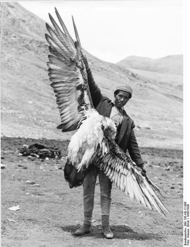 Los buitres son protagonistas en los funerales celestes tibetanos, y alcanzan a tener grandes dimensiones. Imagen, Erns Krause, 1938/39. Cortesía Bundesarchive.