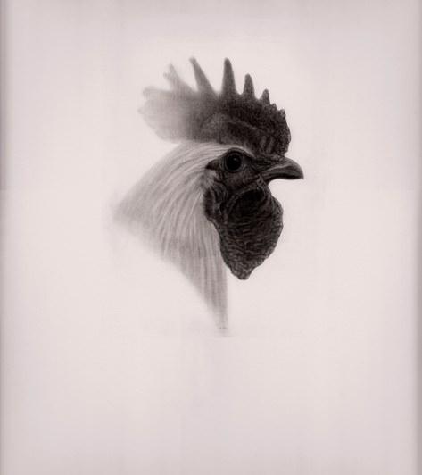 """Detalle de """"El gallo, el perro y el zorro"""", de Carlos Mondriá. 30 x 40 cm. grafito sobre papel. Imagen cortesía del autor."""