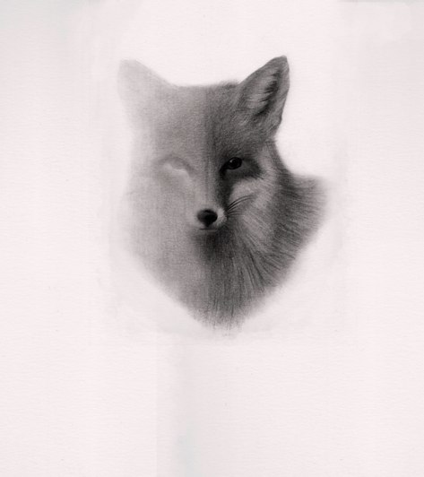 """Detalle de """"El gallo, el perro y el zorro"""". de Carlos Mondriá. 30 x 40 cm. grafíto sobre papel. Imagen cortesía del autor."""