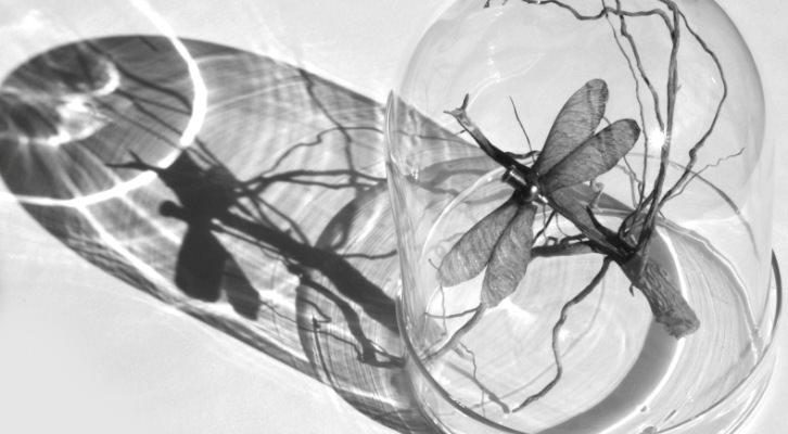Rossana Zaera a través de la neurobiología