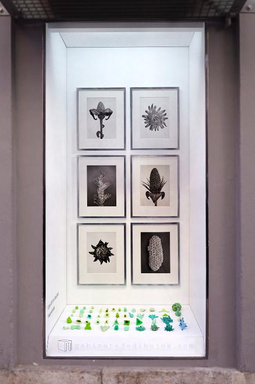Taxonomías, de Ernesto Casero, en el Gabinete de dibujos de Gris. Imagen cortesía de Gris.