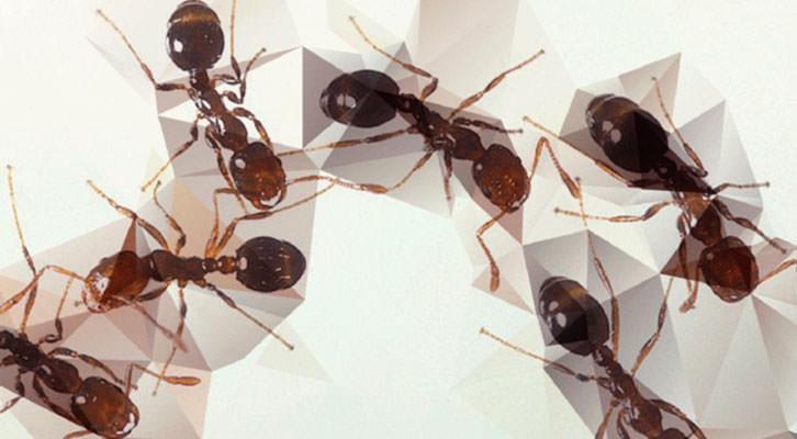 ANT Arte y Naturalezas Tecnológicas en Galería Punto.