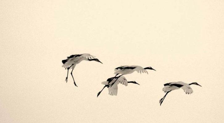 Fotografía de Yamamoto. Cortesía de Espaciofoto.
