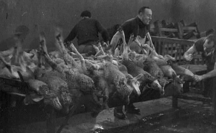 Fotograma de Le sang des betes, de Georges Franju. Imagen cortesía de la Filmoteca de CulturArts.