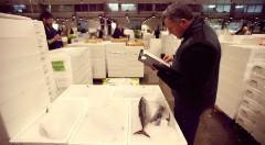 Una instántanea del mercado de pescado de Mercabarna. Fotografía cortesía de los organizadores.