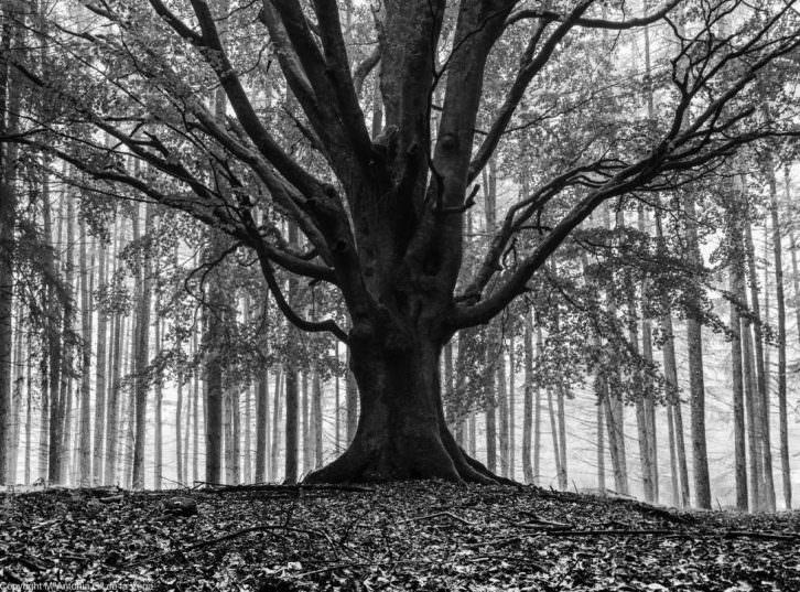 Memorandum Natura, de. Imagen cortesía de Railowsky.