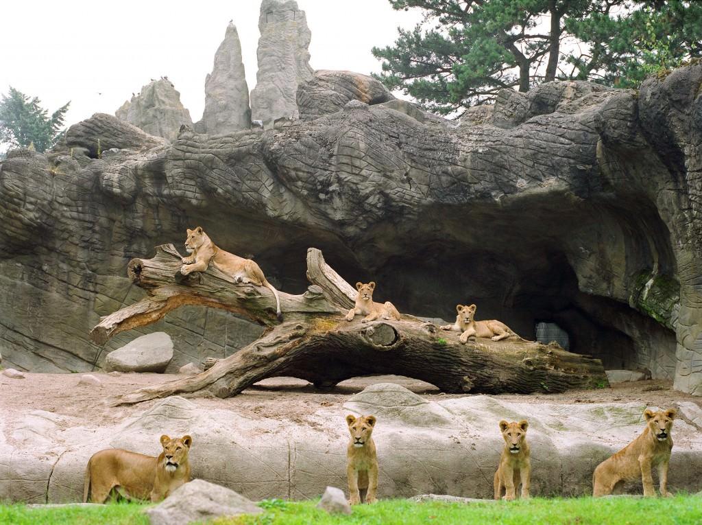 Imagen de la obra 'Siete leonas en Hamburgo', de Ignacio Evangelista, que forma parte de la nómina de artistas del Museo del Ruso de Alarcón. Fotografía cortesía del Museo.