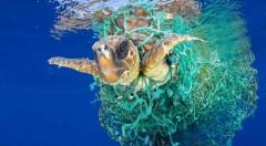 Tortuga enredada en una red de pesca. Premio World Press Photo 2017. Fotografía de Francis Pérez.