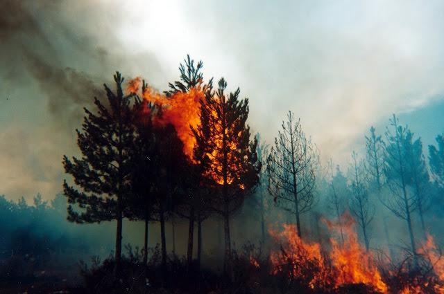 Y después de los incendios forestales ¿qué? Imagen cortesía Noticias Forestales/Forestry News