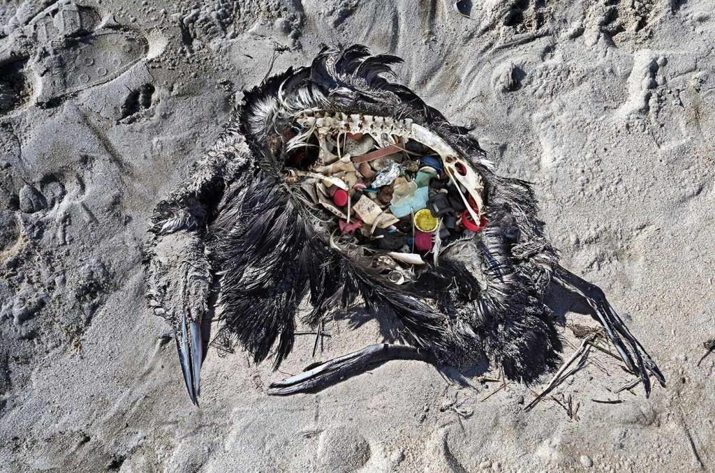 Imagen de la obra 'Plástico', de Paulo Oliveria. Fotografía cortesía de Las Naves.