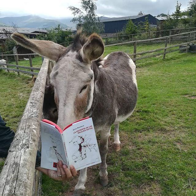 """""""#culturebaal #summertime #laentropíadelosrelojesrotos #animals. También los burros leen 'La entropía de los relojes rotos'. Poniendo orden"""". Fotografía cortesía de Ximo Rochera."""